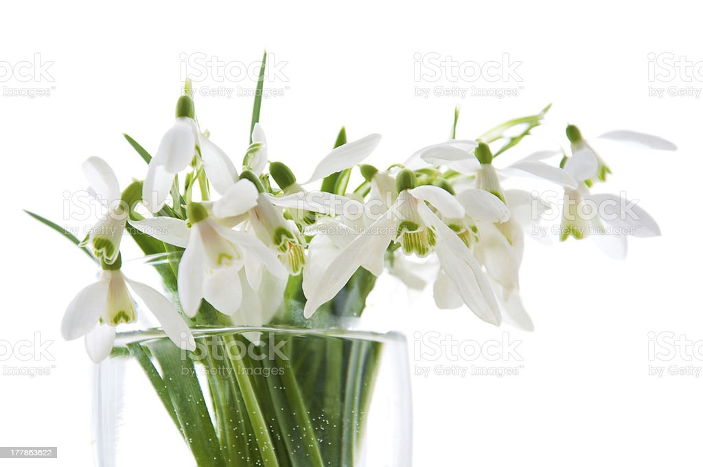 Spring snowdrops royalty-free stock photo