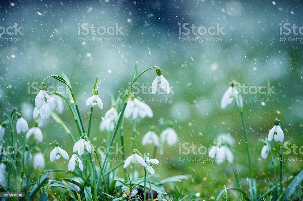 Spring Snowflake in snow storm stock photo