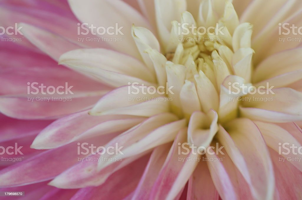 Spring softness royalty-free stock photo