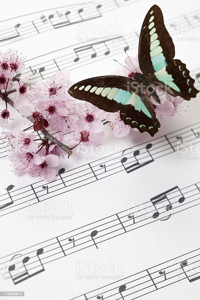 Spring song stock photo