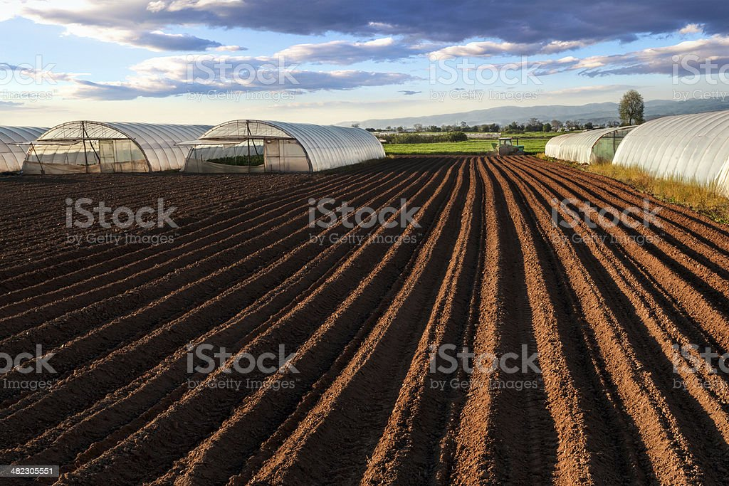Spring sowing stock photo