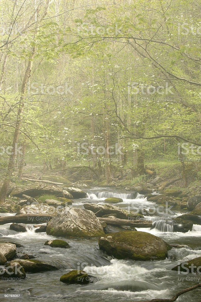 Spring Stream in Fog royalty-free stock photo