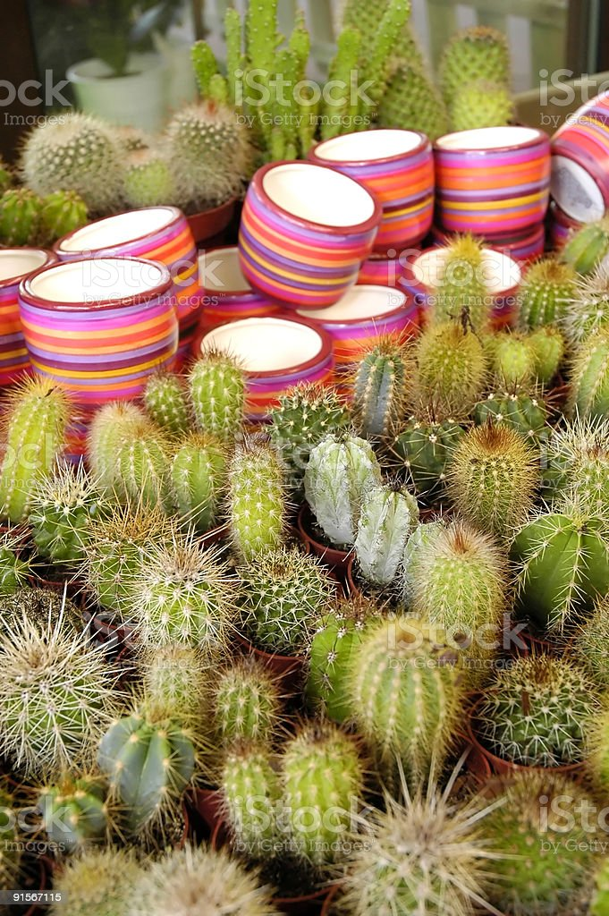 Spring Summer Happy Flower cactus royalty-free stock photo