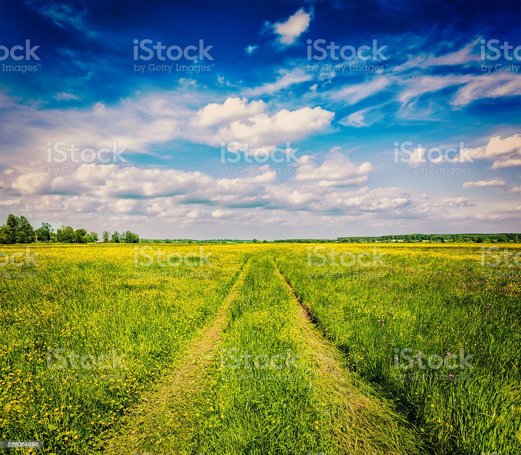 Spring summer - rural road in green field scenery lanscape stock photo