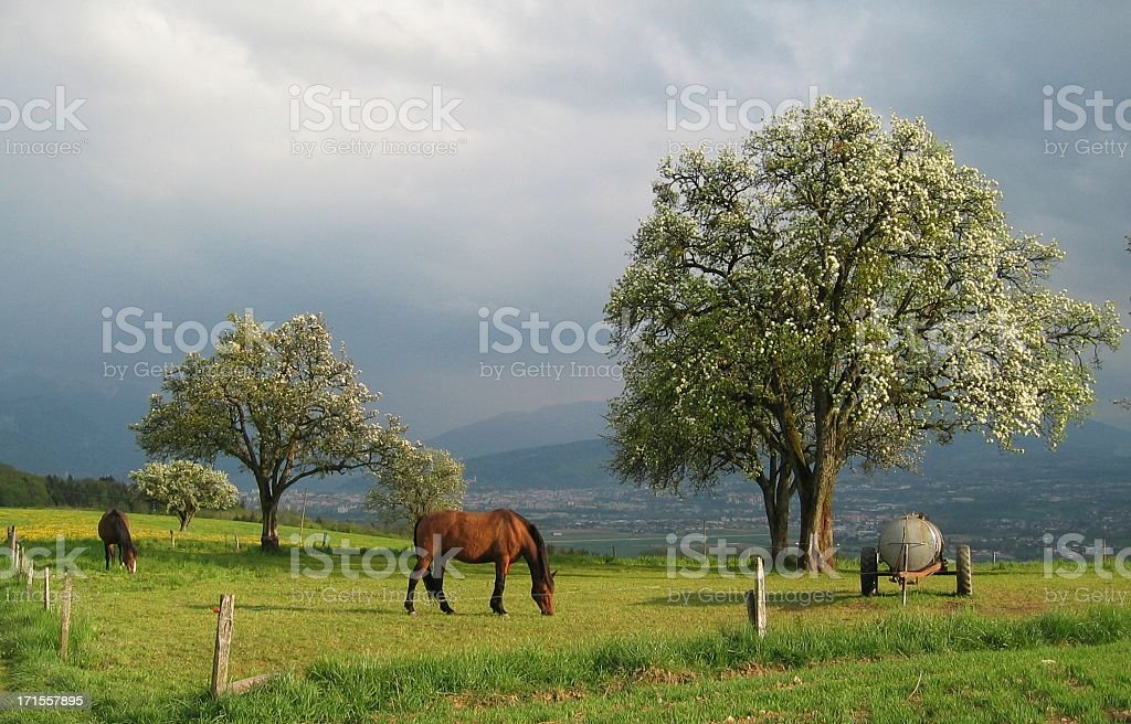 Spring Sunlight on horses field royalty-free stock photo