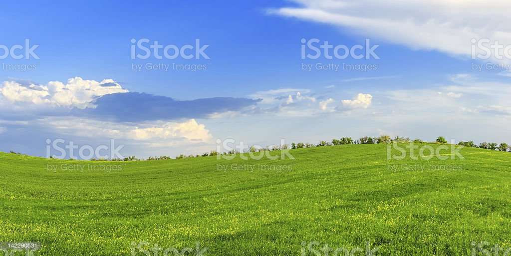 Spring sunny day on a green meadow royalty-free stock photo