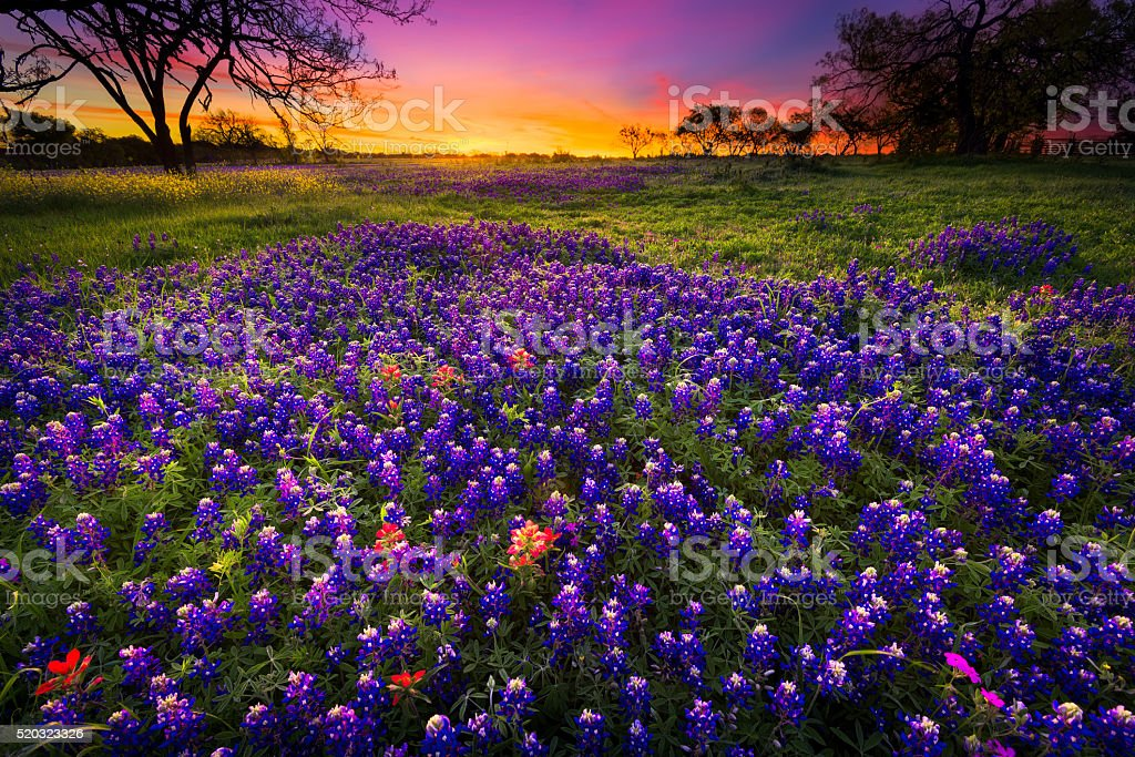 Spring Sunrise in the Texas Hill Country stock photo