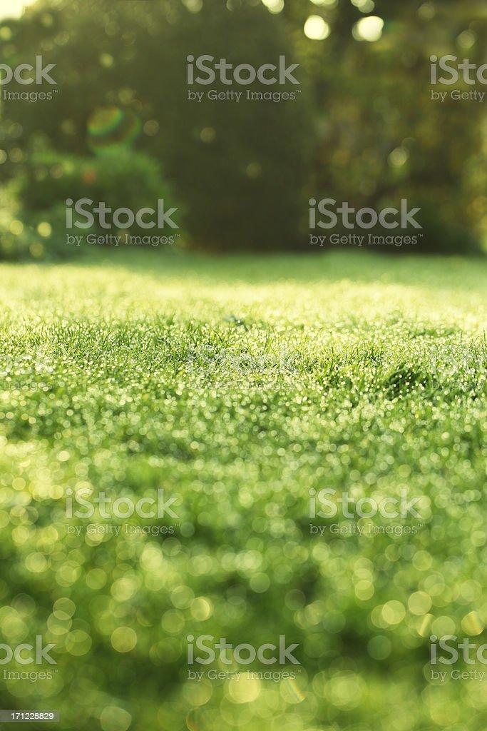 Spring Sunrise on Lawn stock photo