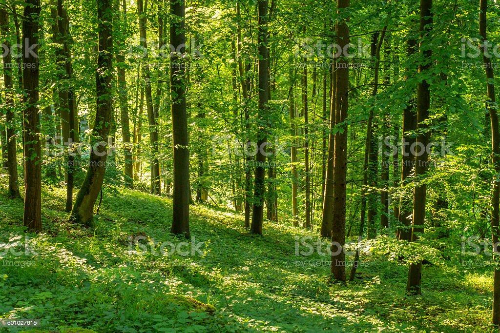 Frühling Sonnenuntergang hinter Bäumen Lizenzfreies stock-foto