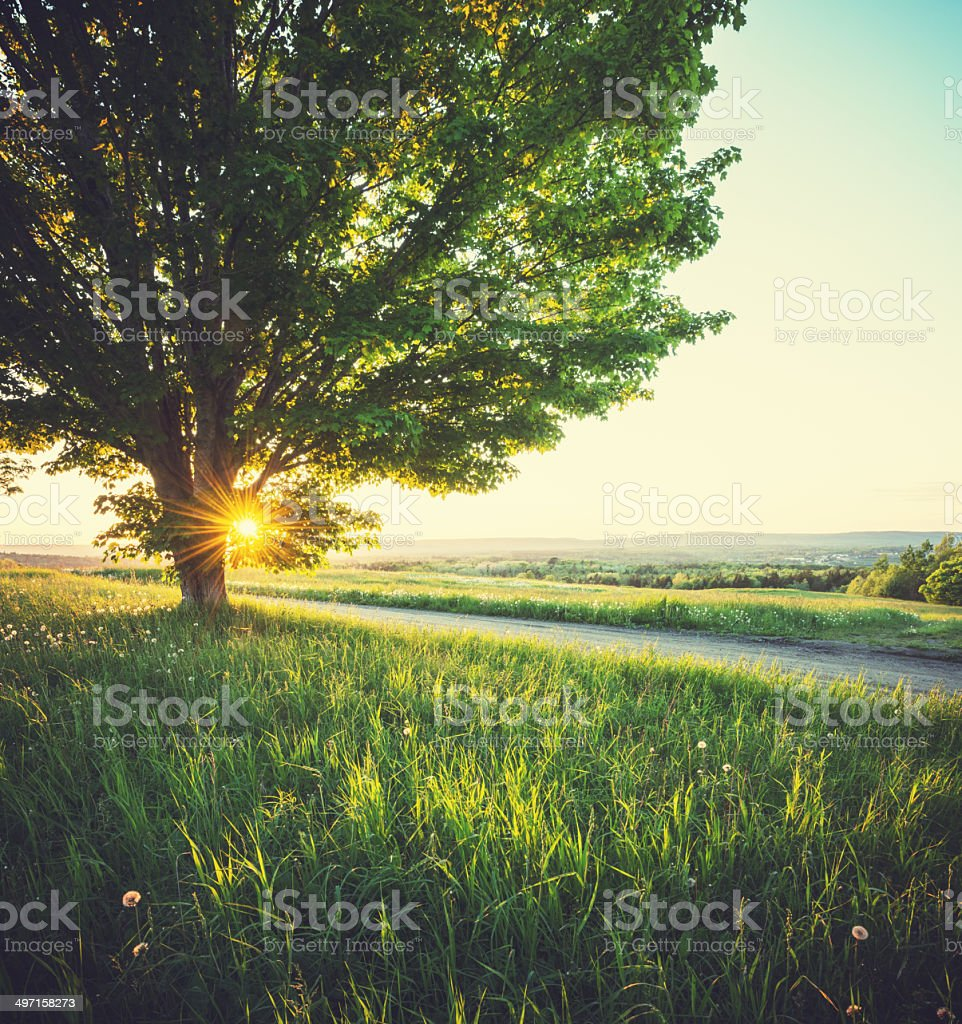 Spring Sunshine stock photo