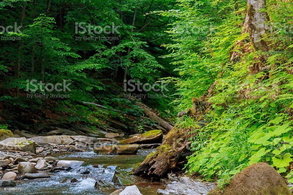 Spring time along the Little Pigeon River in the stock photo