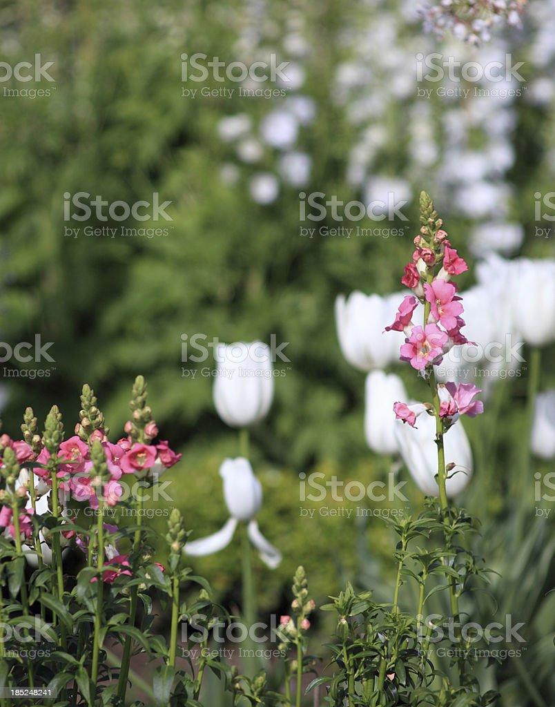 Spring time flower garden royalty-free stock photo