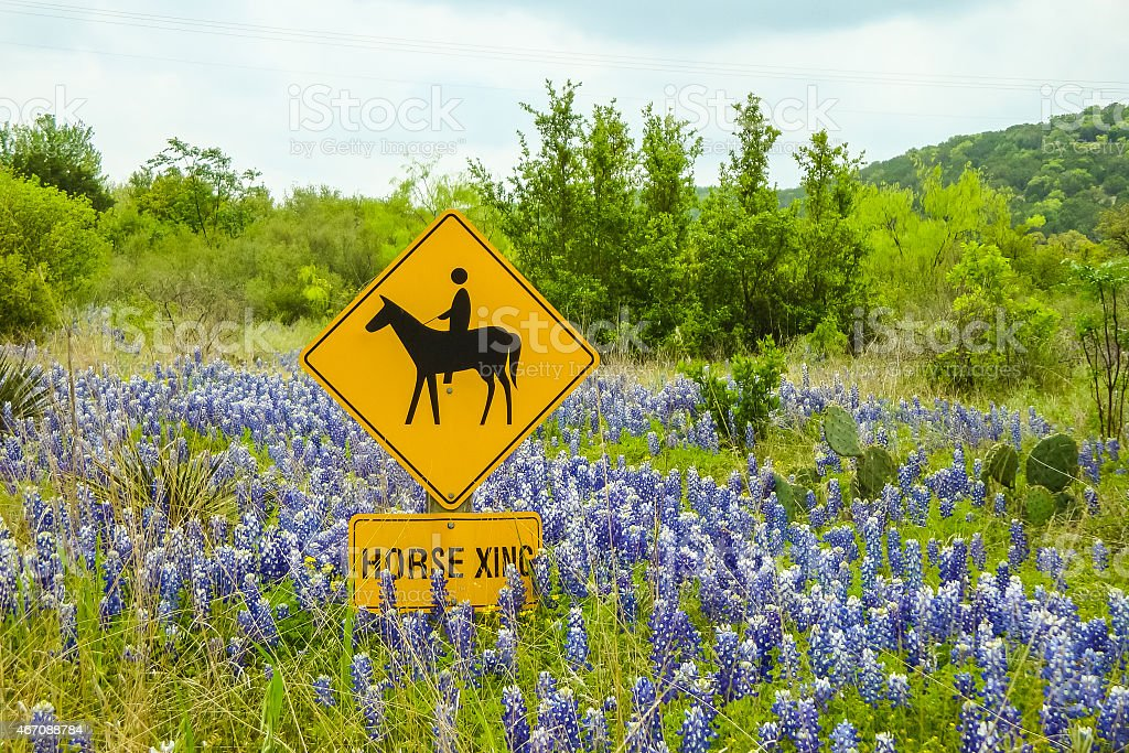 Spring Time in Texas stock photo