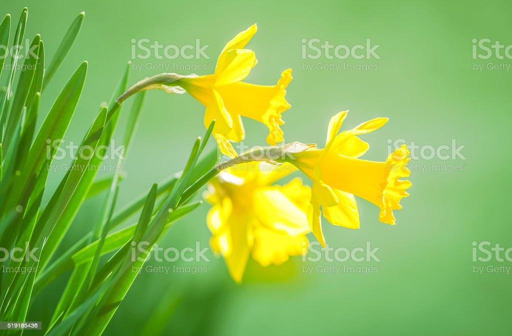 Spring time magic stock photo