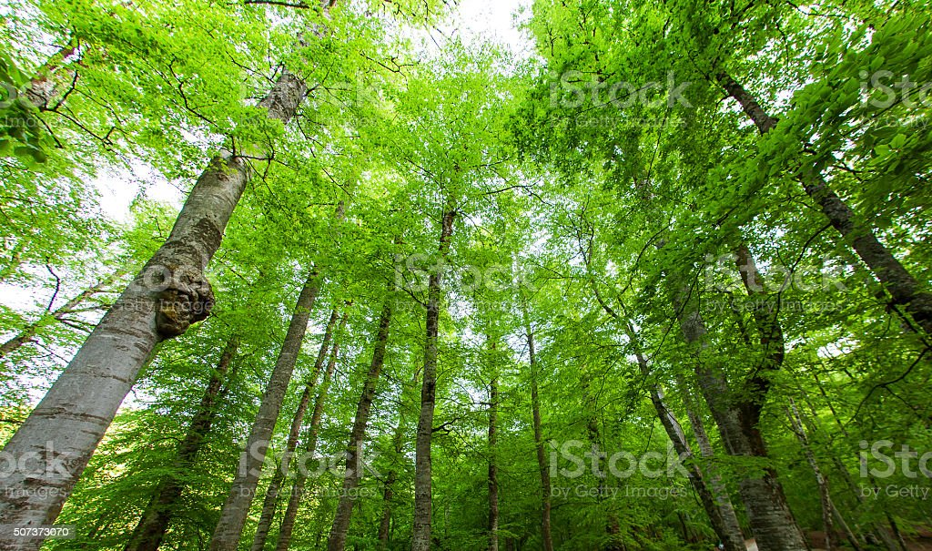 Spring Tree and Green Leaves stock photo