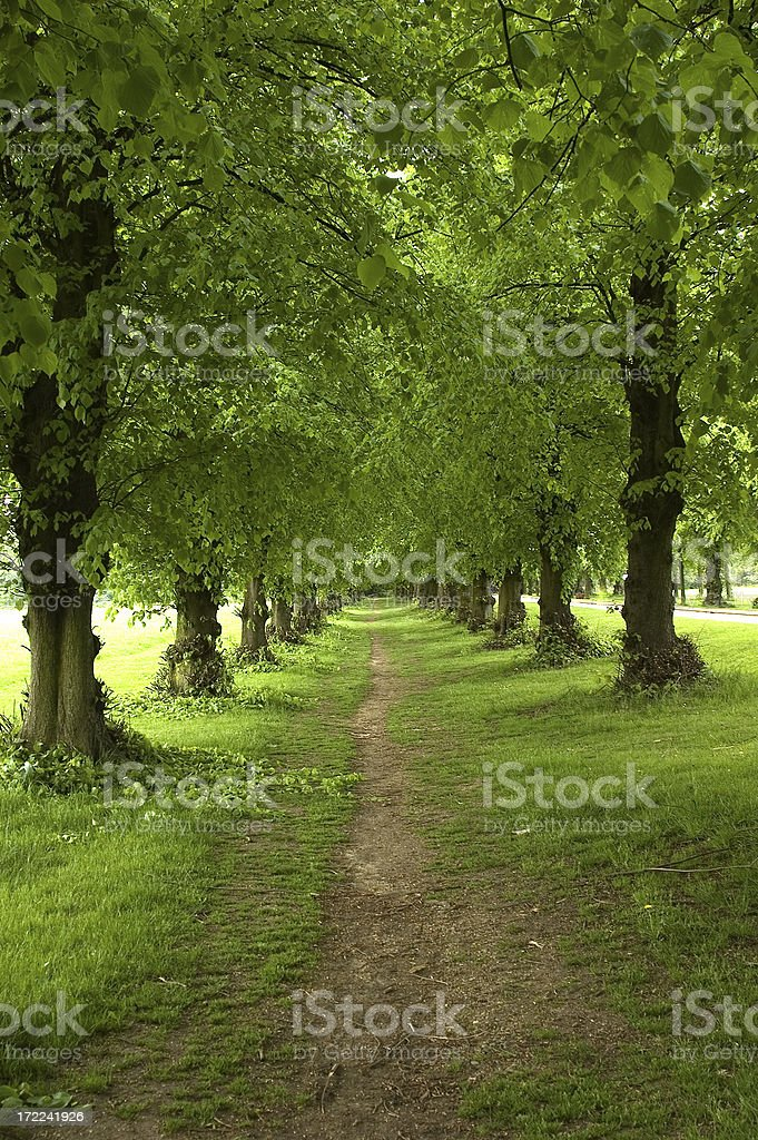 Spring tree avenue royalty-free stock photo