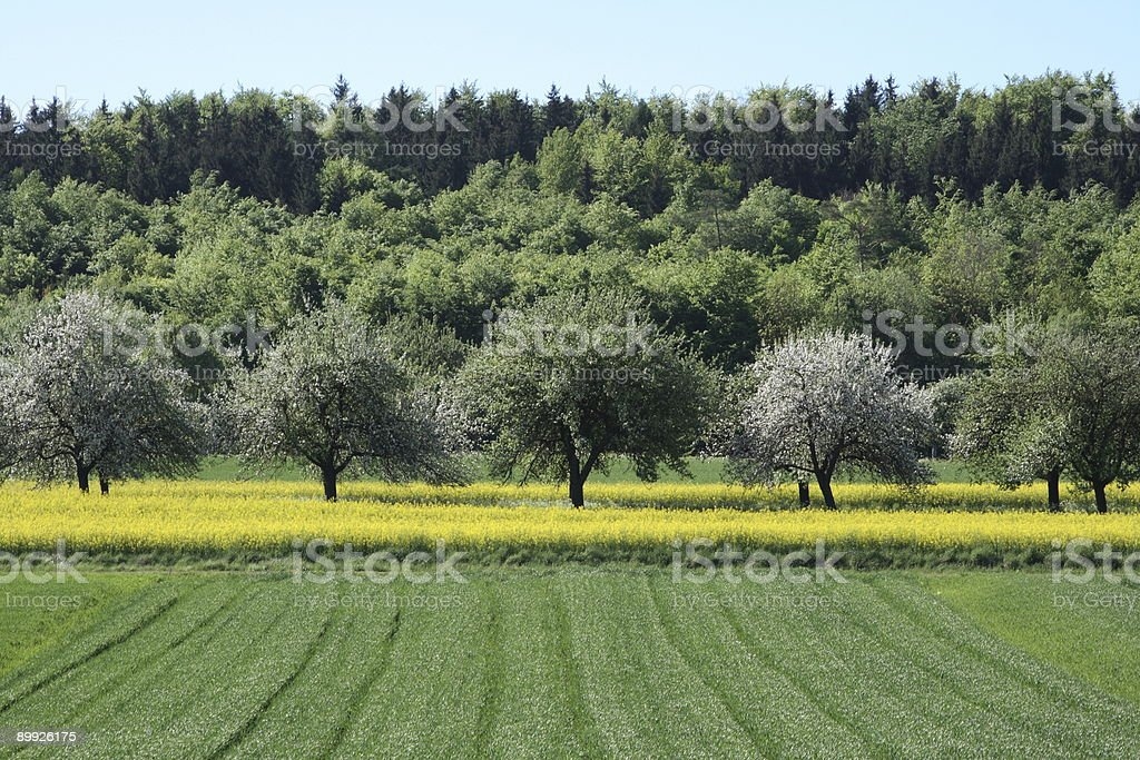 Spring Tree View stock photo