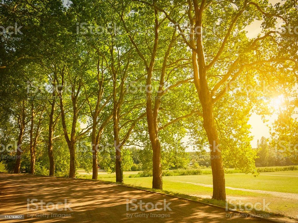 Spring treelined path stock photo