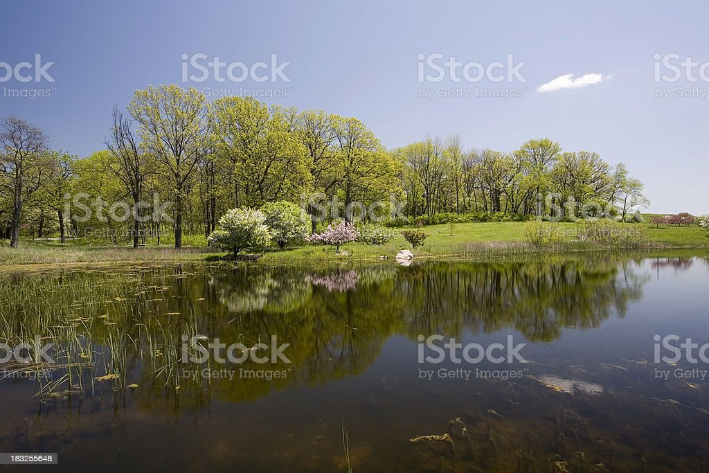 Spring Trees and Lake stock photo