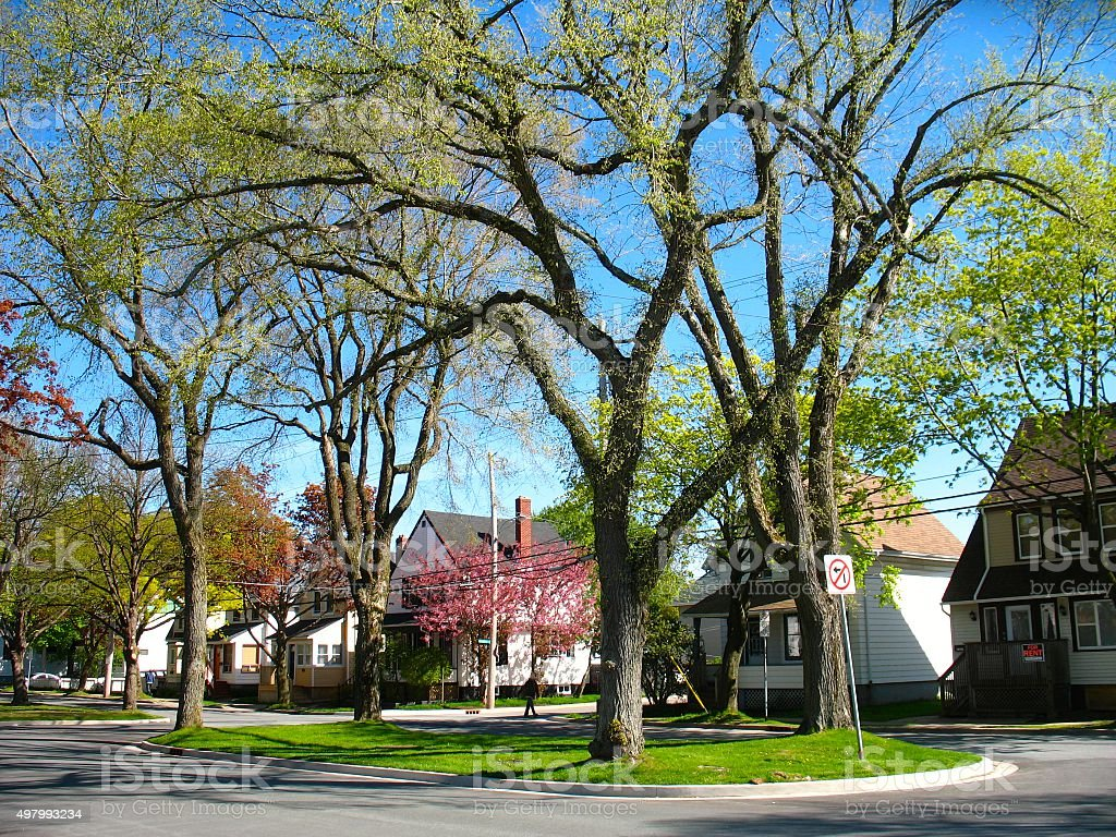 Spring Trees Blooming Residential City Street Scene stock photo