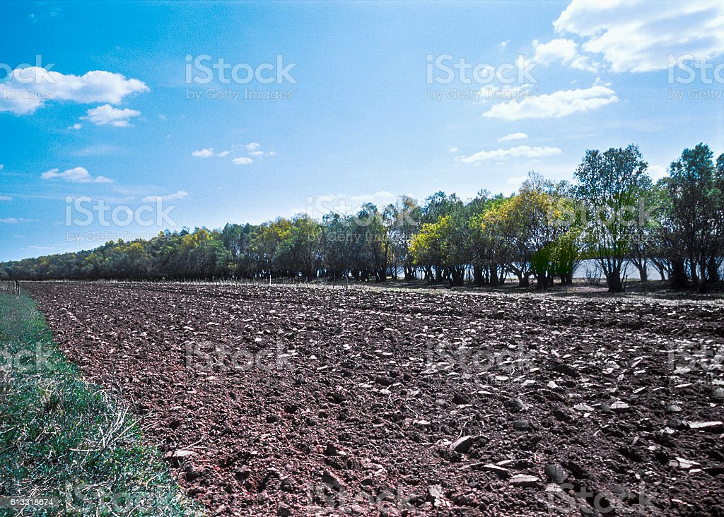 Spring. Trees growing around arable land. Astrakhan region, South Russia stock photo