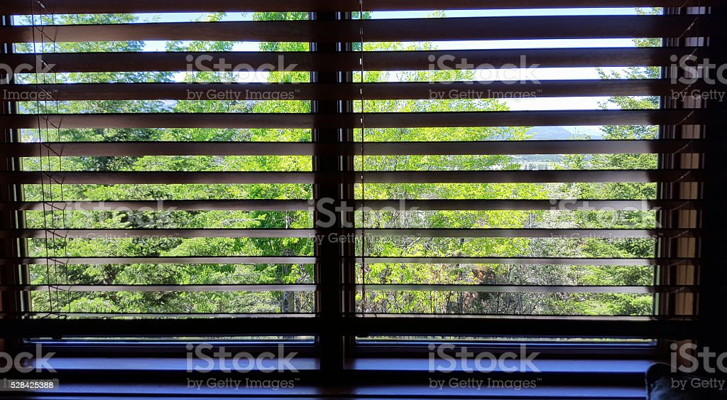 Spring Trees Through The Venetian Blinds stock photo