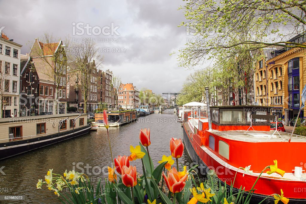 Spring tulip flowers in Amsterdam, Netherlands stock photo