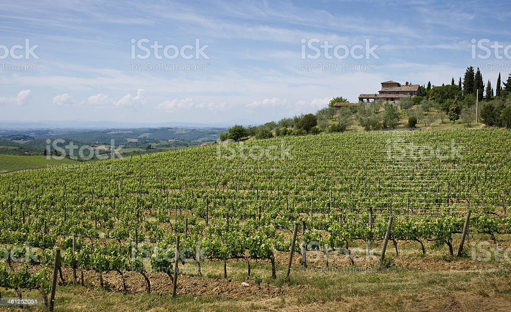 Spring Tuscan Landscape in Chianti Region with Vineyards royalty-free stock photo