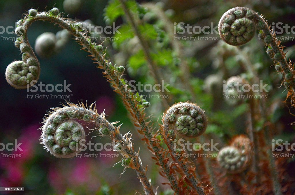 Spring Unsprung royalty-free stock photo