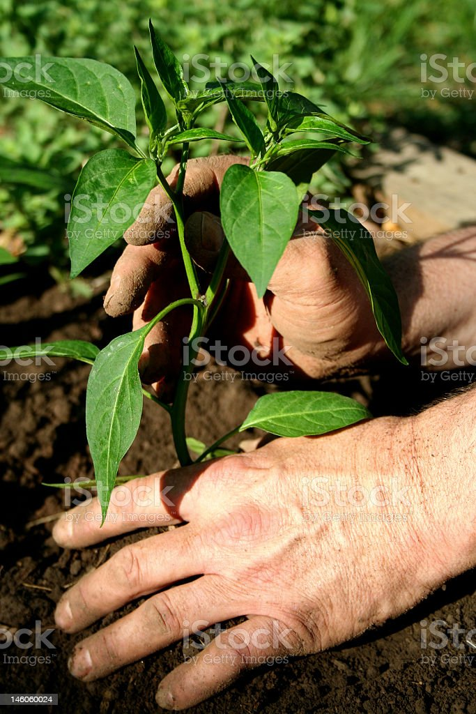spring vegetable gardening royalty-free stock photo