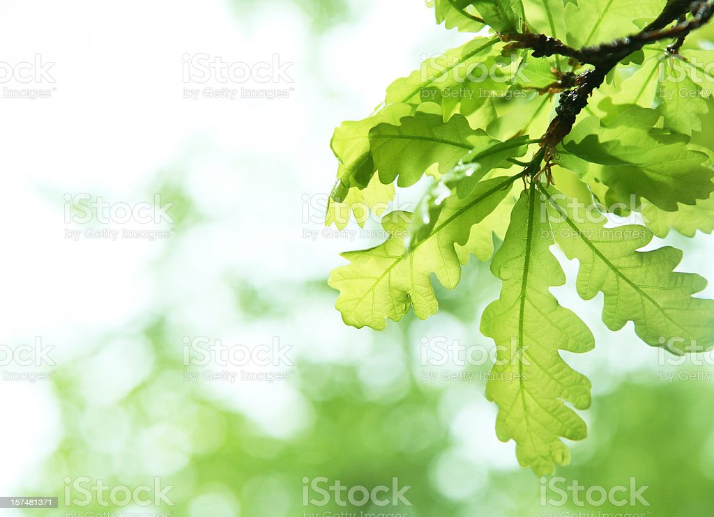 spring verdure stock photo