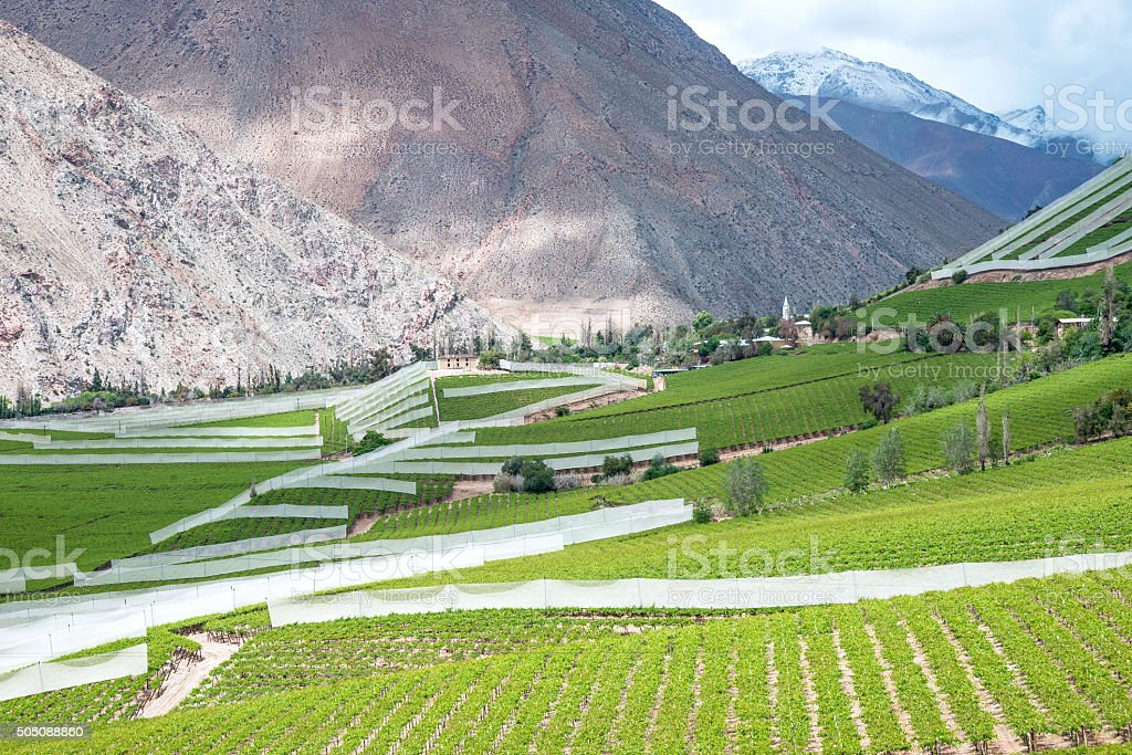 Spring Vineyard, Chile stock photo