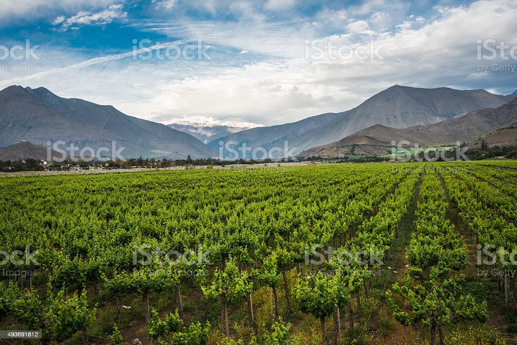 Spring Vineyard. Elqui Valley, Andes, Chile stock photo