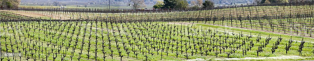 Spring Vineyard Panorama royalty-free stock photo
