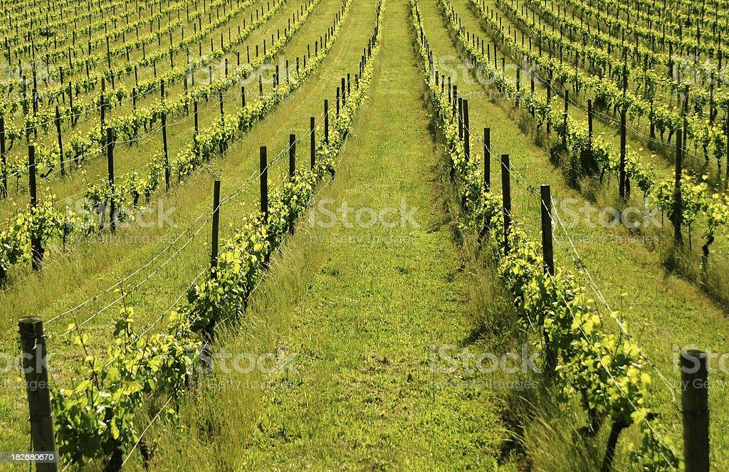 Spring Vineyard royalty-free stock photo