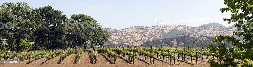 Spring Vineyard Series - Panorama royalty-free stock photo