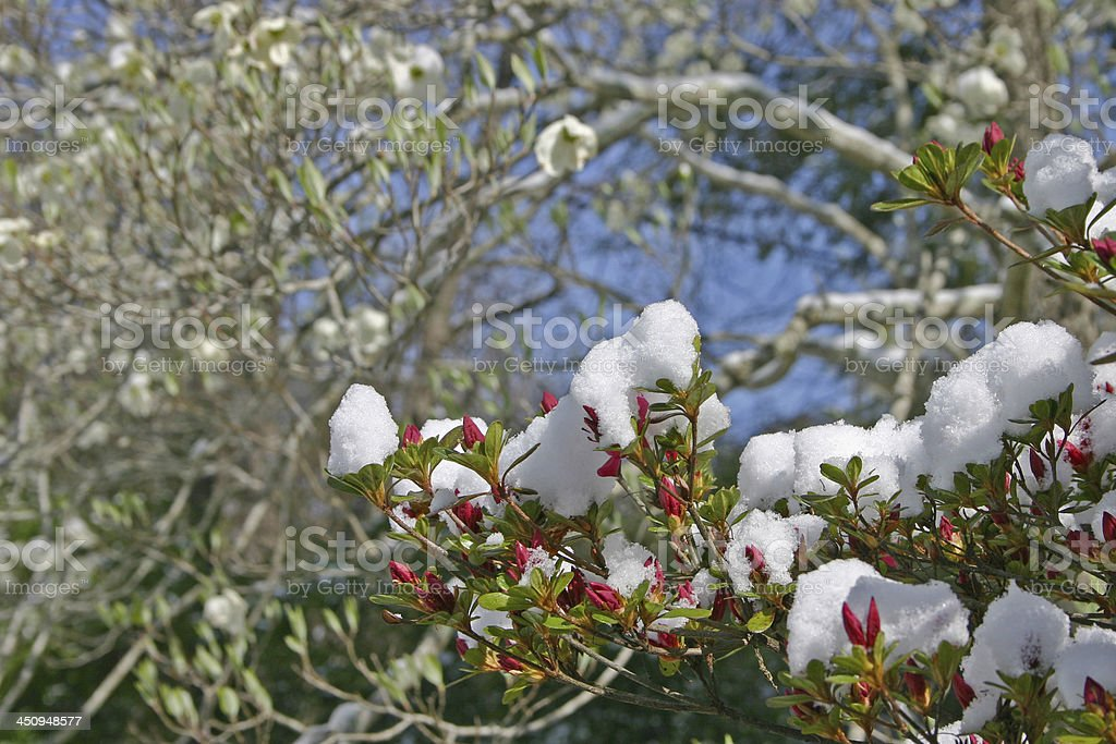 Spring Weather stock photo