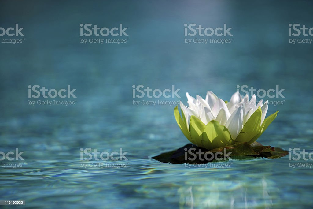 spring wedding water lilies stock photo
