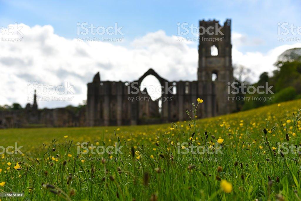 Spring Wild flowers, Fountains Abbey, England stock photo