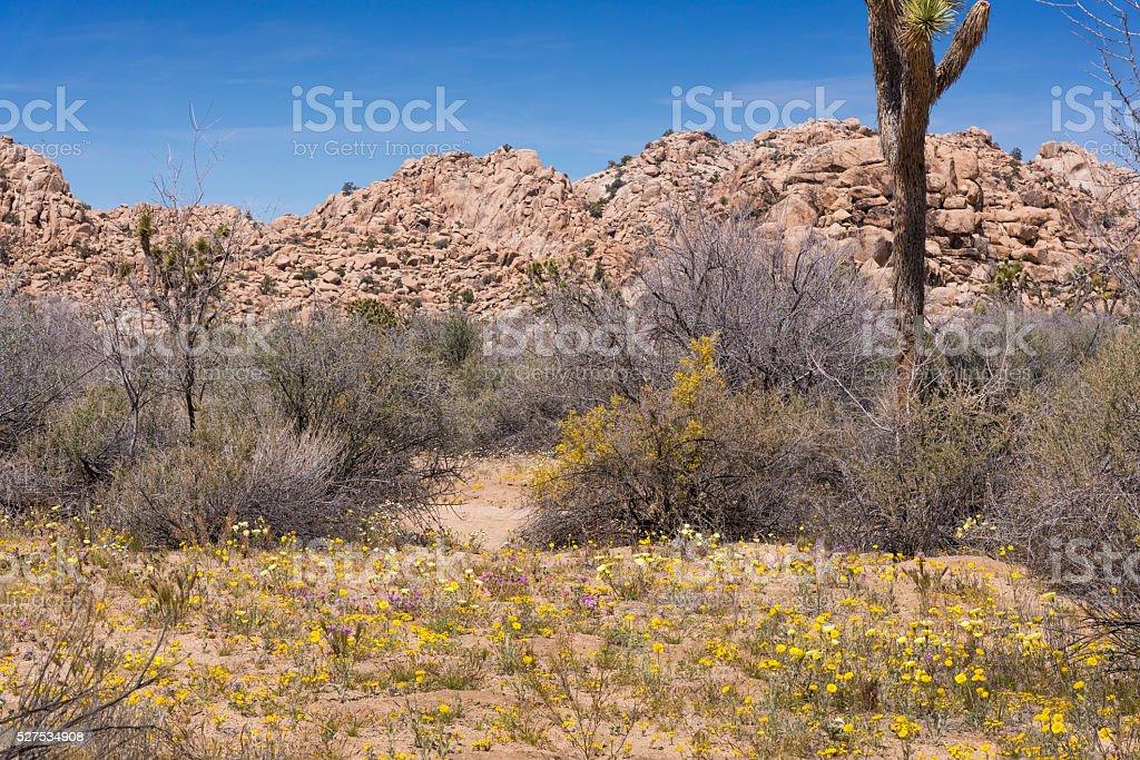 Spring Wildflowers in Joshua Tree National Park stock photo