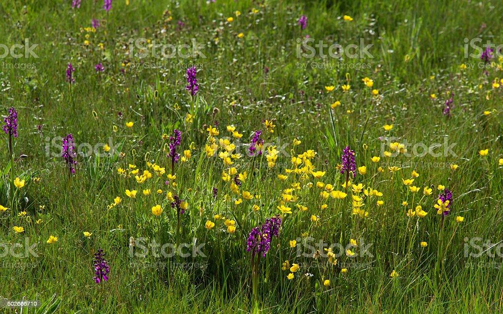 Spring Wildflowers in Meadow - Flores Silvestres en Prado stock photo