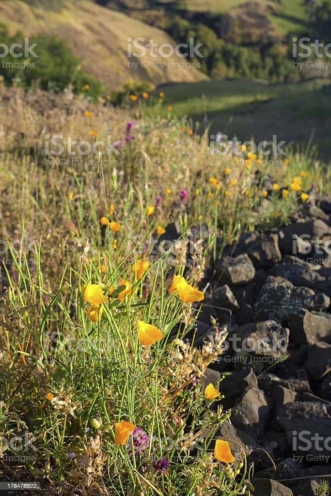 Spring Wildflowers in Rural California royalty-free stock photo
