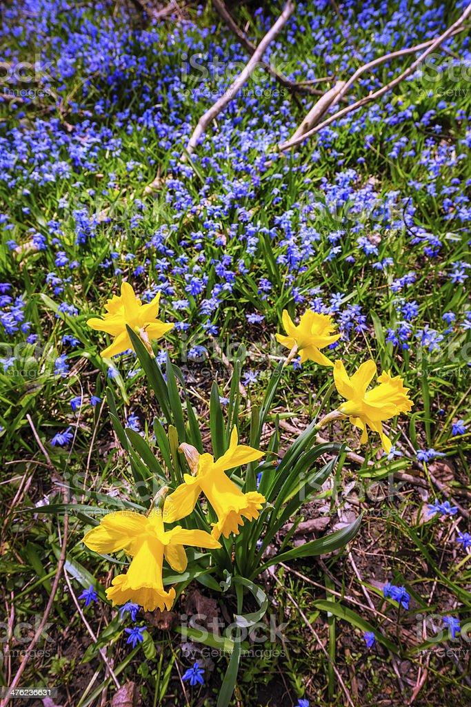 Spring wildflowers royalty-free stock photo