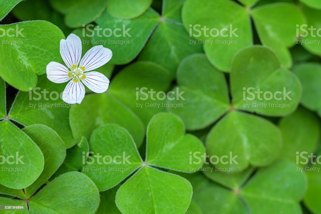 Spring wildflowers stock photo