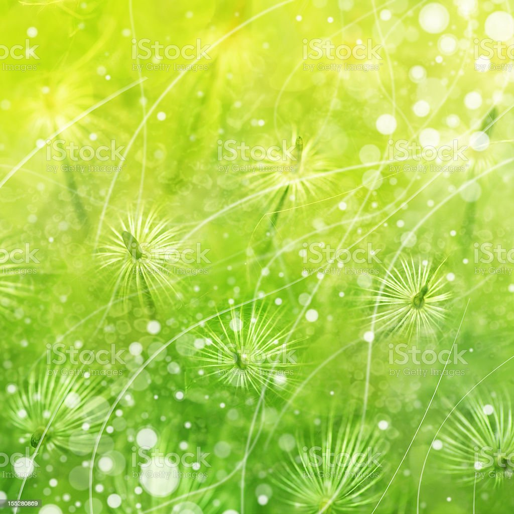 spring wind royalty-free stock photo