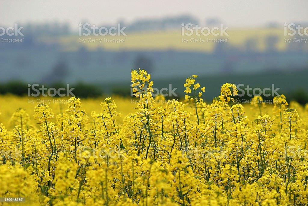 Spring Yellow stock photo