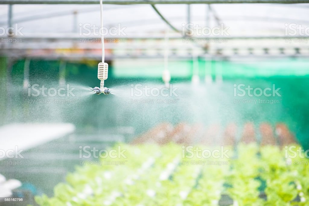 Springer spraying for watering vegetables hydroponic farm stock photo