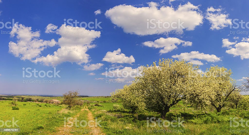 SPRING.Rural landscape:  path with trees in bloom. - (Apulia) ITALY- stock photo