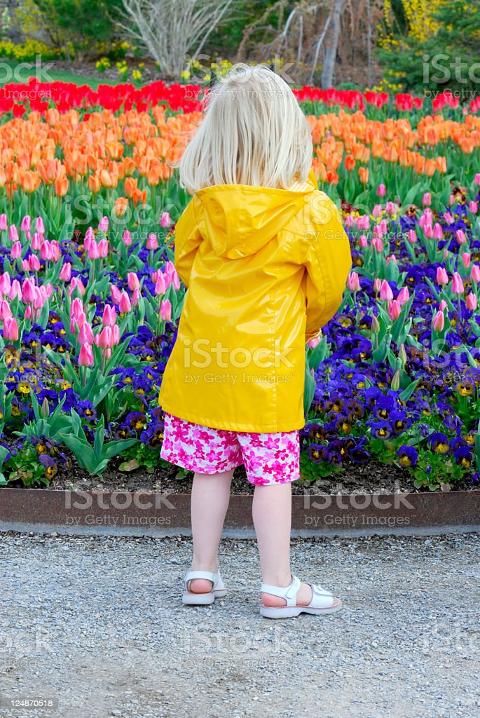 Spring's Magic royalty-free stock photo