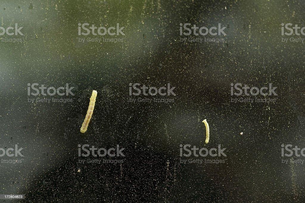 Springtime Annoyances - Pollen and Caterpillars stock photo